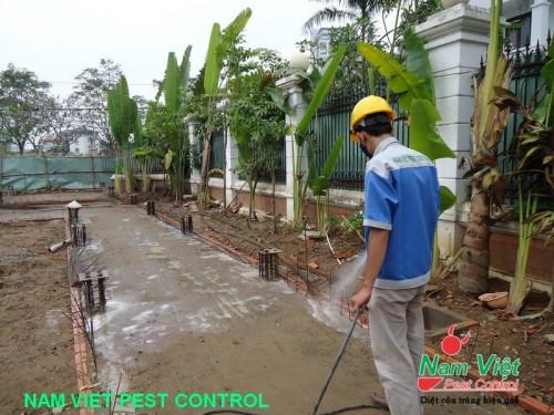 Dịch vụ phòng chống mối cho công trình xây dựng nhà ở, nhà xưởng, công ty, phòng mối chung cư