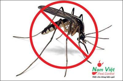 Tiêu diệt muỗi - bảo vệ sức khỏe của chúng ta