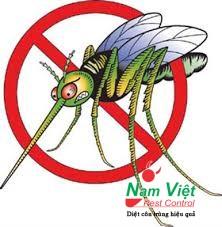 Cung cấp thuốc diệt muỗi hiệu quả